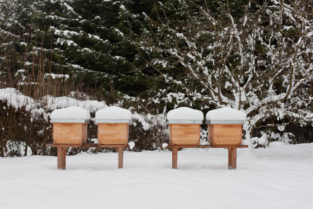 sterben bienen im winter landshuter honig. Black Bedroom Furniture Sets. Home Design Ideas
